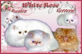 �White